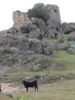 el castillo de Las Navas de Tolosa, donde habitan los toros