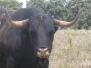 una visita a los toros de cuadri